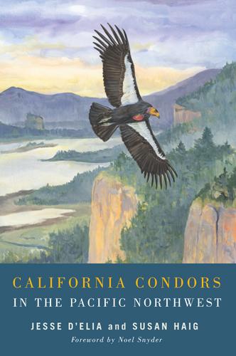 Condors cover
