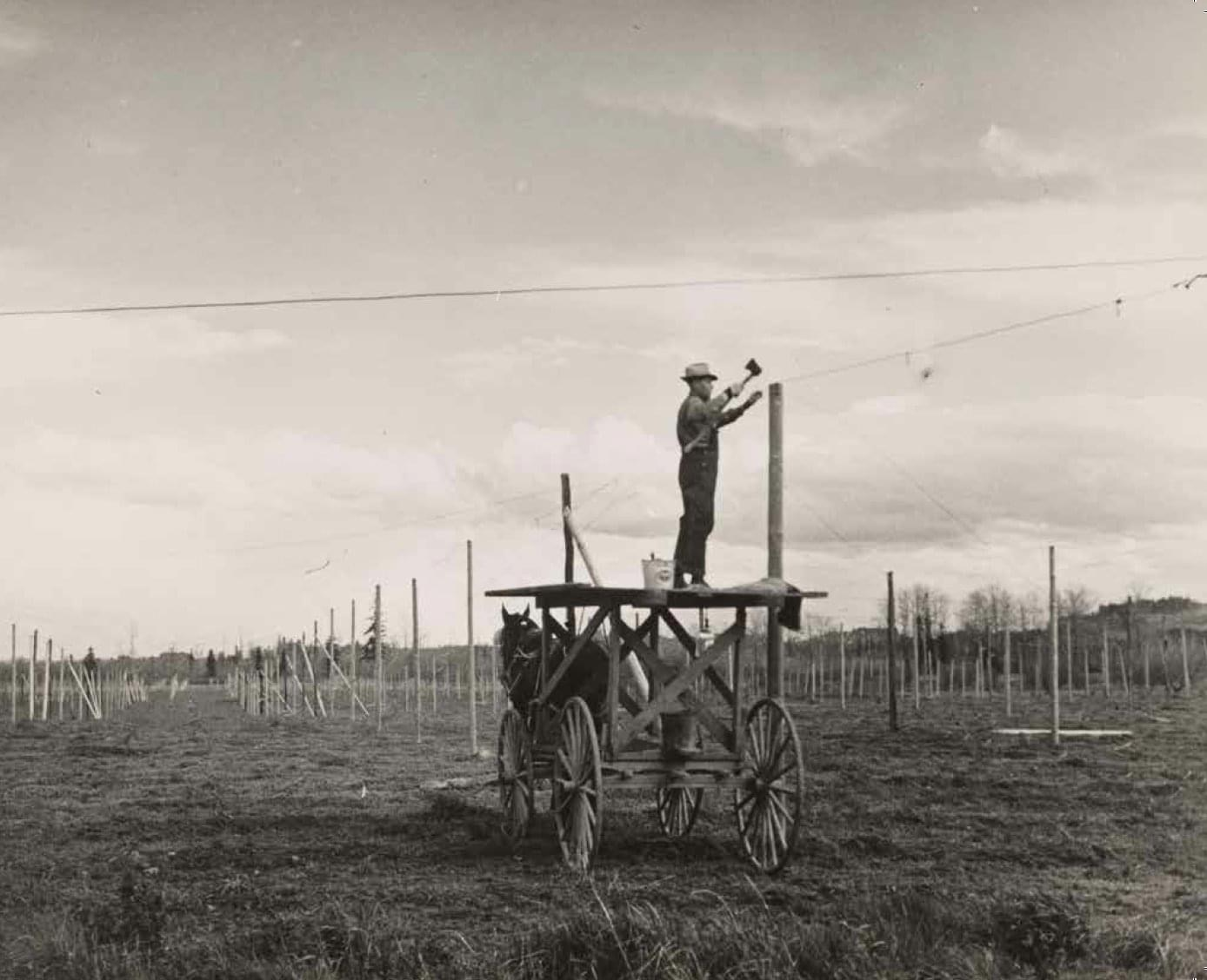 Securing wire to poles with tractor pulling high tower, 1952